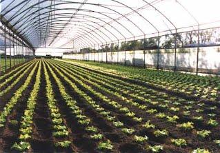 contabilizzazione emissioni agricole